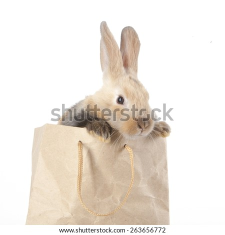 Little rabbit in a paper bag  - stock photo