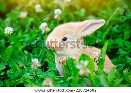 Little rabbit in green grass