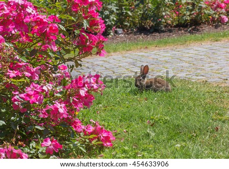 little rabbit in the blooming rose garden