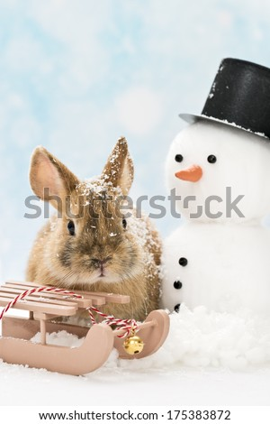 little rabbit in winter landscape with slide and snowman