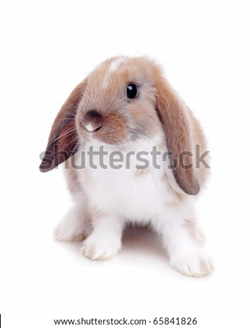 Little rabbit on a white background - stock photo