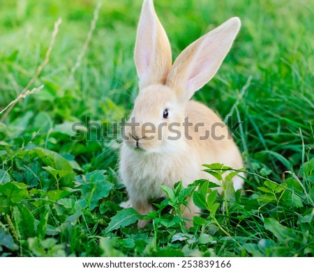 Little rabbit on green grass - stock photo
