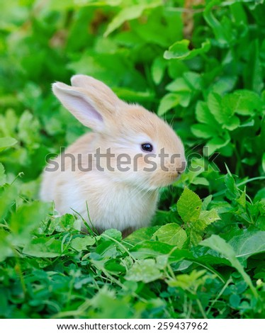 Little rabbit on green grass