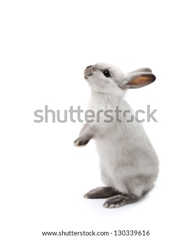 Little rabbit on white - stock photo