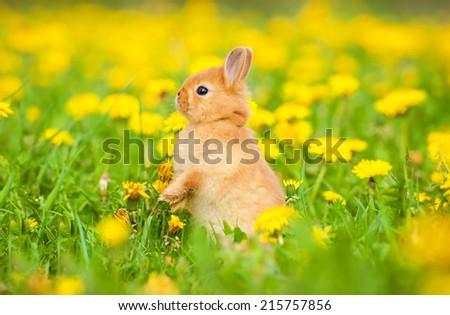 Little rabbit outdoors - stock photo