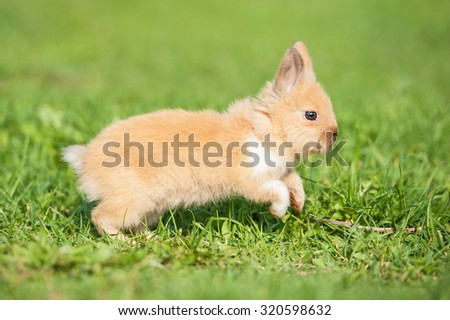 Little rabbit running in summer