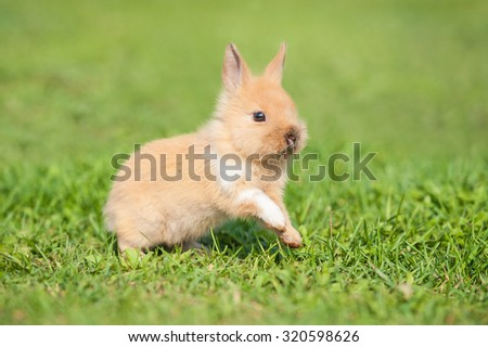 Little rabbit running on the grass
