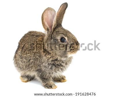 little rabbits on white background - stock photo