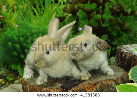 Little rabbits sitting on the stump in garden