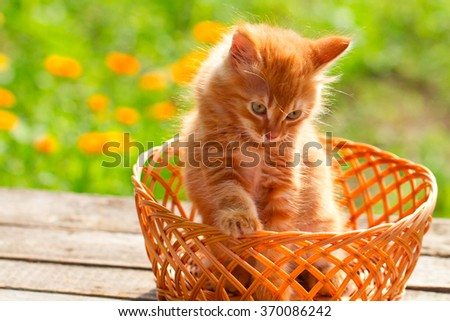 Little red cat in a wicker basket on green grass outdoors - stock photo