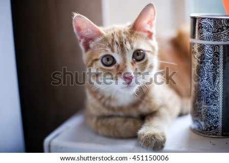 little red hair cat at kitchen sill