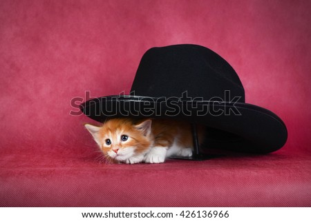 Little red-haired kitten peeking out from under the hat. A deep red background. Studio photography. - stock photo