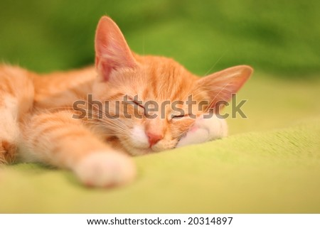 little red kitten - stock photo