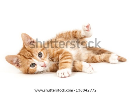 Little red kitten, lying on the ground isolated on white background - stock photo