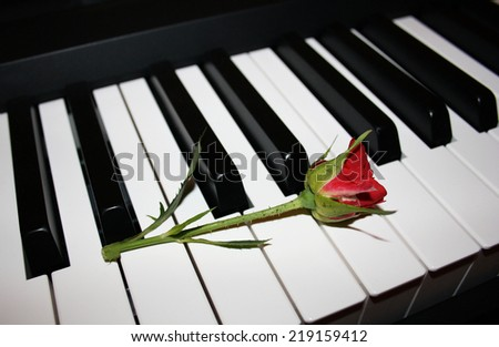 Little red rose lies on the keys of the piano - stock photo