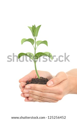 Little render of a plant growing in a woman hands on a white isolated background