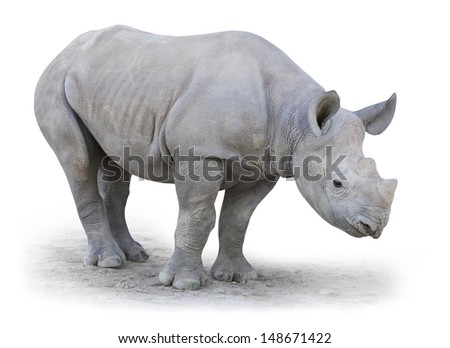 Little Rhino. The Northern White Rhinoceros, or Northern Square-lipped Rhinoceros (Ceratotherium simum cottoni) isolated on white background.  - stock photo