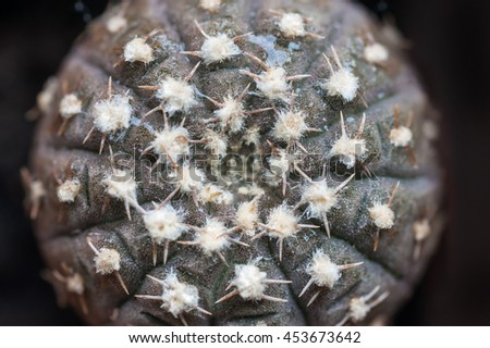 Little round prickly cactus in a flower pot viewed from above - stock photo