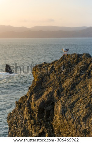 Little seagull on the cliff in San Francisco - stock photo