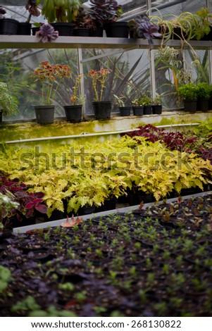 little seedlings plant garden. - stock photo