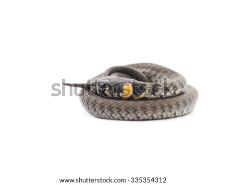 Little snake isolated on a white background.
