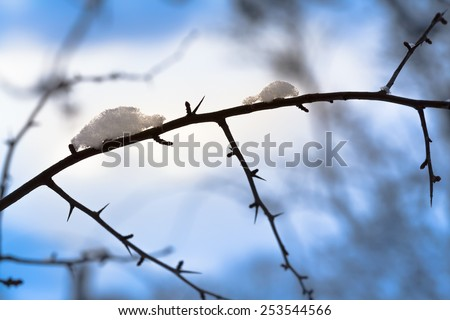 Little snow figures like animals meet at a tree branch/Funny Snow Animals - stock photo