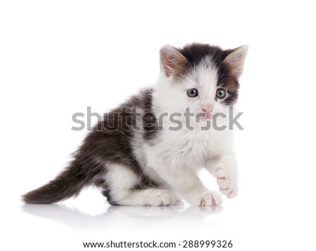 Little spotty curious kitten on a white background. - stock photo