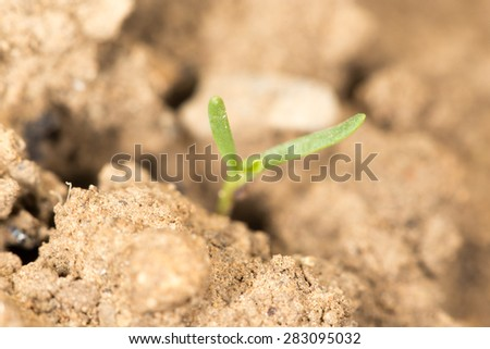 little sprout in the ground in nature - stock photo