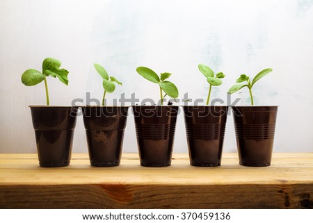 Little sprouts in brown plastic cups on a wooden table. Small green plants. Concept of environmental protection. - stock photo