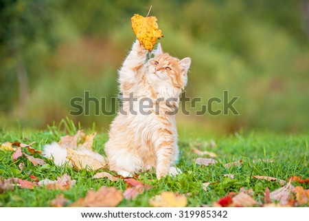 Little tabby cat catching falling leaves in autumn - stock photo
