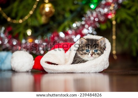 Little tabby kitten sitting in a christmas hat - stock photo