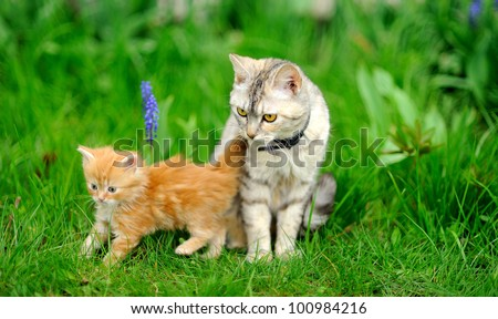 little tabby kitten with mother cat on green grass - stock photo