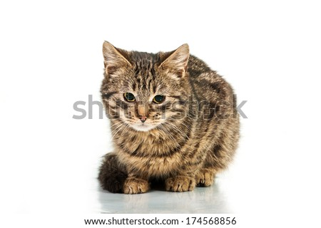 Little tabby kitten with sad eyes sitting isolated on white background