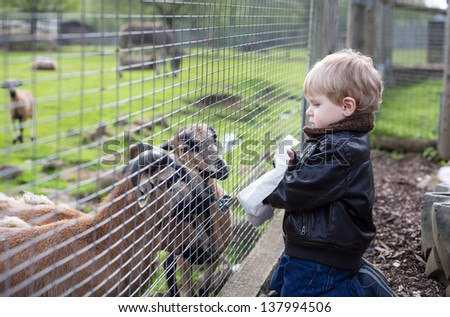 Little toddler boy feeding animals in zoo in summer