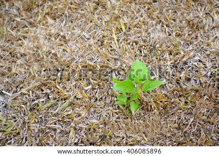 Little tree on blurry brown grass background:Close up,select focus with shallow depth of field:ideal use for background. - stock photo