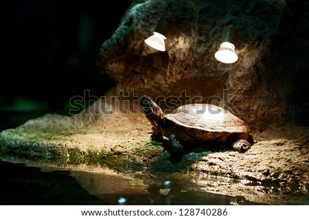 Little turtle having sunbathes under the light of lamps - stock photo