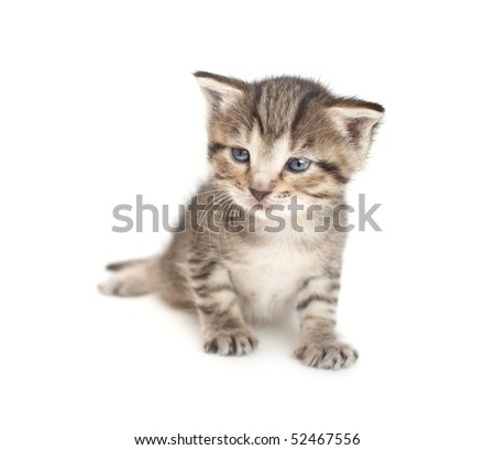 Little two week kitten on white background