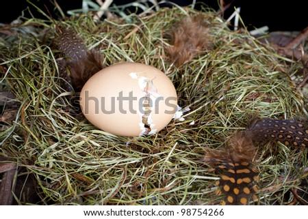 Preguntas sobre el Período de Incubación para los Huevos de Paloma