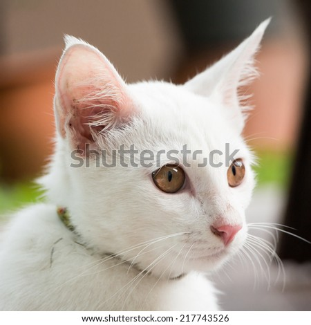 little white cat portrait