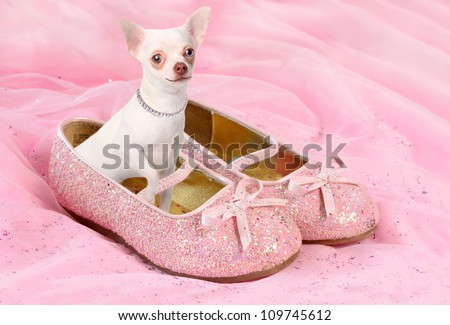 Little white chihuahua sitting in sparkly pink princess shoes wearing a diamond necklace and smiling