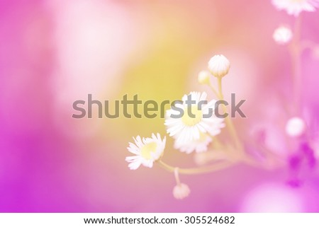 Little white daisy flower and grass sweet bright gradient for sweet love valentine day concept - stock photo