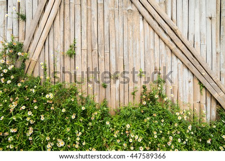 Little white Daisy on bamboo wall background - stock photo