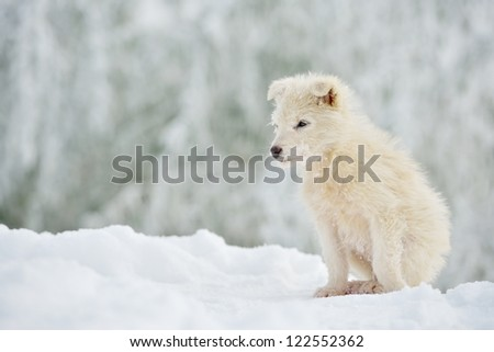 little white dog outdoor in winter