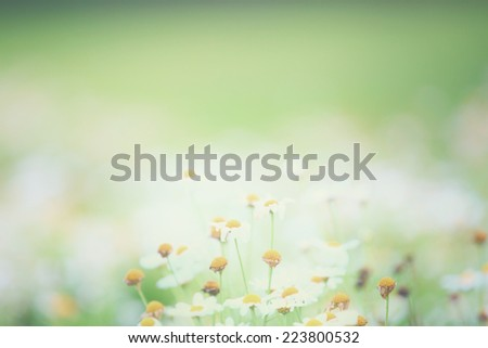 Little white flower  - stock photo