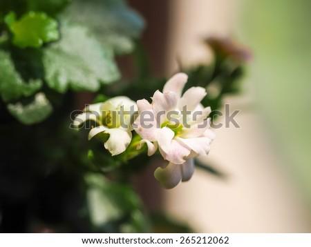 little white flower - stock photo