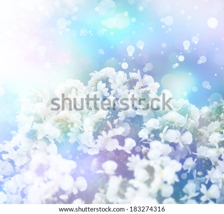 Little white flowers, floral background. Spring background,
