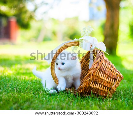 little white kitten in a basket on the grass - stock photo
