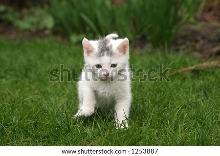 Little white kitten in the garden