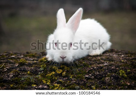 little white rabbit in a field - stock photo