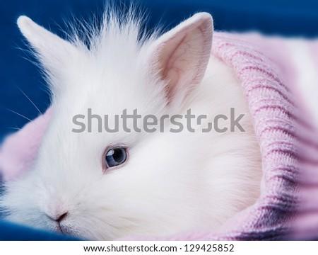 little white rabbit in a soft cap - stock photo